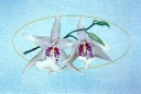 123 Orchid